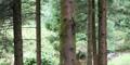 Hafren Forest