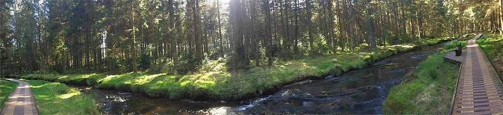 Hafren Forest trail