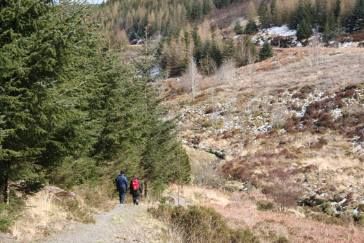 Walking on the Wye Valley Route in the Hafren Forest